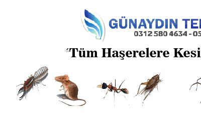 Böcek ve Haşere İlaçlama Şirketleri Ankara
