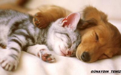 ANKARA TEMİZLİK ŞİRKETİ/Evcil Hayvan Beslenen Evin Temizliği
