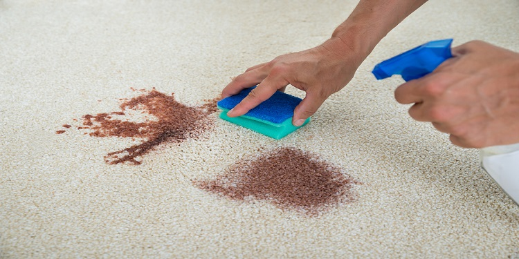 Cropped image of man cleaning stain on carpet with sponge